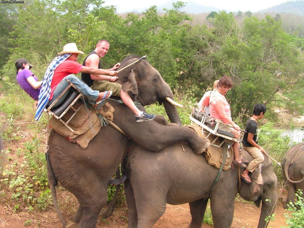 akuvaton.com_kuvei_elephant_safari.jpg